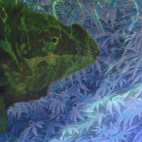 HOUND - Chameleon (POPDRONE REMIX)