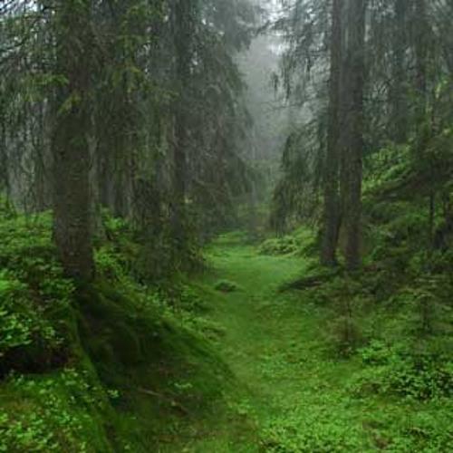 -f-t-h-r- bullarskogen