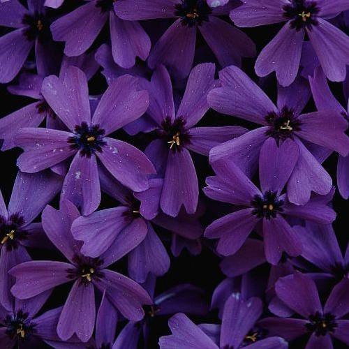Dsum - Purpura Morado Violeta [Mix Tape]