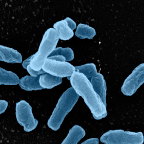 Soil Holds Clues to Antibiotic Resistance