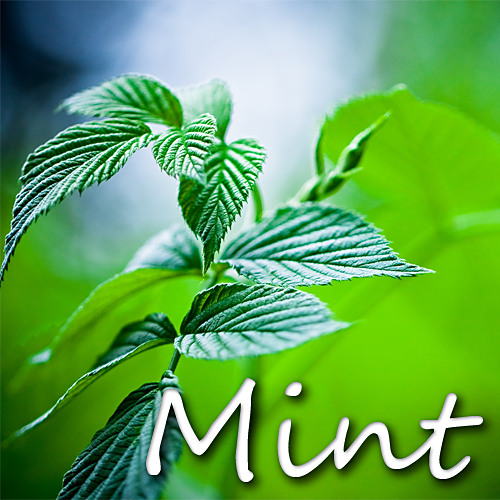 Mint (Preview)
