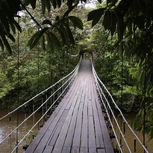 CoLEmanmusicproject - Borneo Breakdown ____(feat_Field_Recordings_from_Borneo)