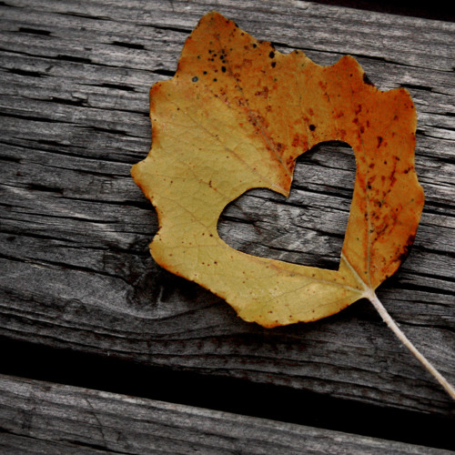 My October Symphony..