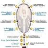 Santo Rosario - Misterios Gloriosos (Mie-Dom)