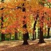Farshad Hosseini  MUSIC Autumn MIX