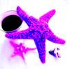Starfish and Coffee