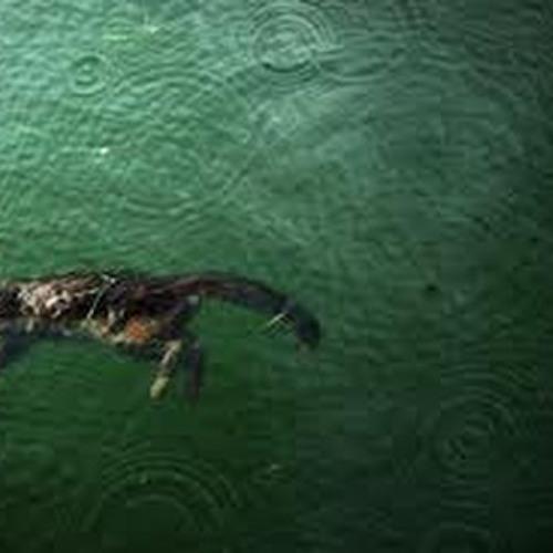 Drowning Kats - Insomniac Vs. Taesty Gecko