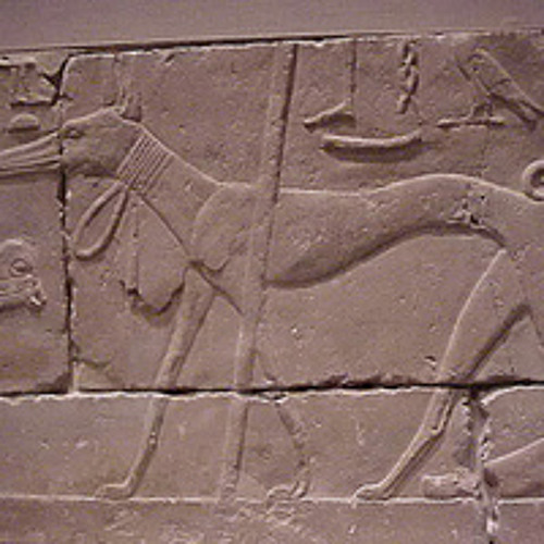 Dog Of Egypt