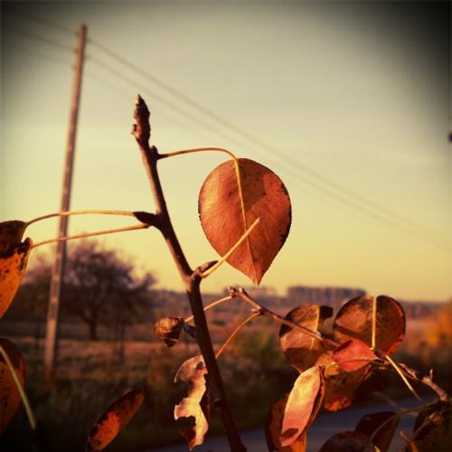 Grzegorz Bojanek - Warm Autumn [disquiet0042-naivemelody]
