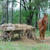 Rusty Bear - Russian Horse
