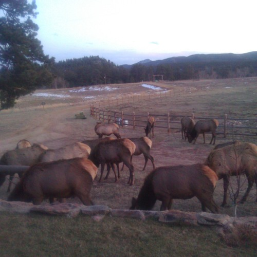 elk for Jo