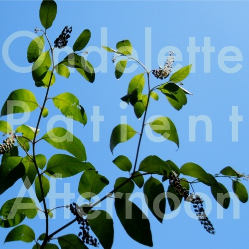 Ondelette - Patient Afternoon