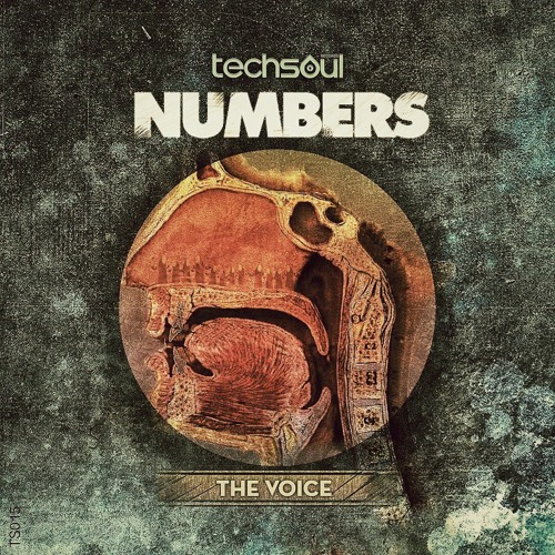 Numbers - The Voice (Original Mix)