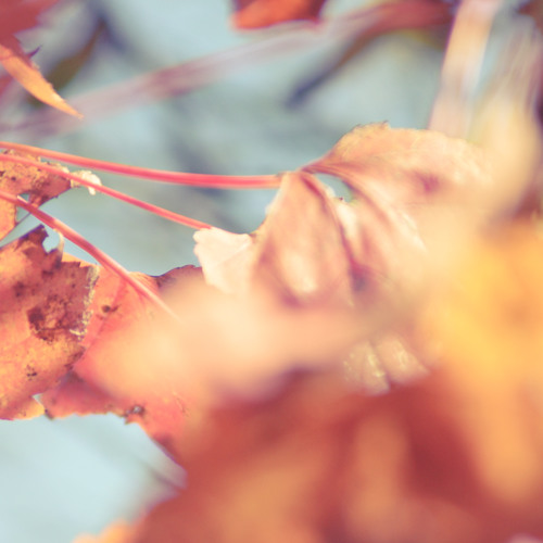 Red Cherry Chapstick
