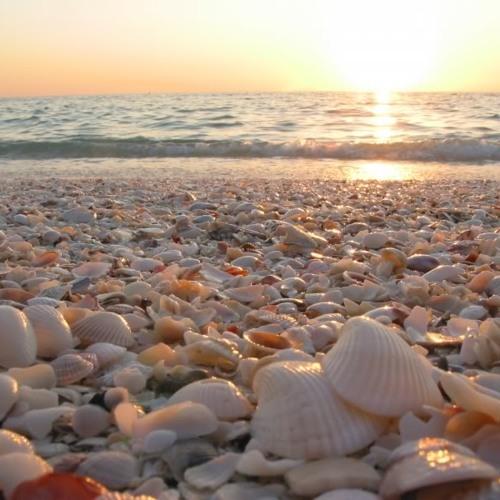 Seashell Shuffle
