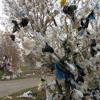 Plastic Nation-Lyrics by Sophia Gordon