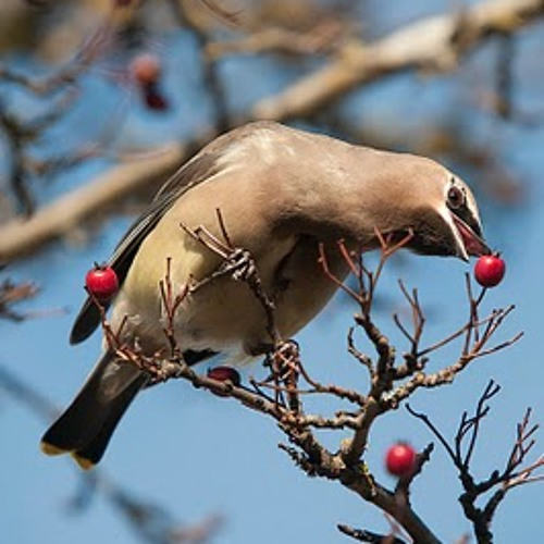 Fruits and Nuts are Birds Too (Sighting's in the Spring)