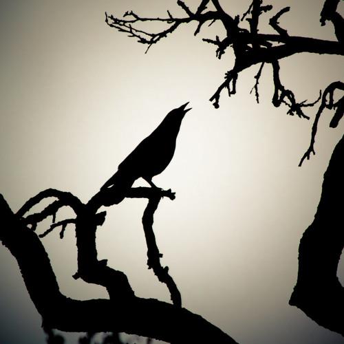 PO - Blackbird (  Dark Garden )