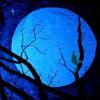 Full moon sonata