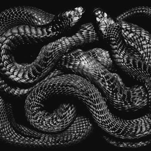 p-fang - snakes