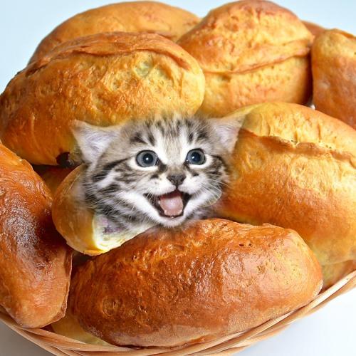 Exalt - Pie with a cat