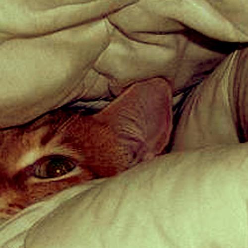 Die Tigerkatze auf dem Bett