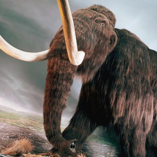 Neanderthalensis - Incantation chamanique