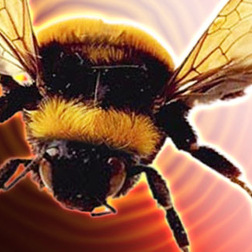 """The Bees / Snap Judgment, """"The Great Outdoors"""""""