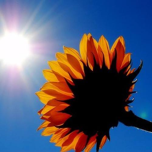 Bob Marley - Sun Is Shining (V-Sta Remix)