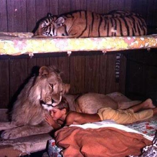 Lion In My Bed Ft. DNAE BEATZ  (Free DL)