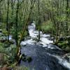 Relax sonoro para Reiki sonidos de naturaleza - relaxing nature river forest sounds for Reiki