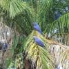 Pájaro chogüi - Los Hijos del Paraguay