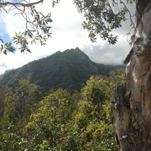 The Rhino - Kauai Sunday Sunrise Sessions