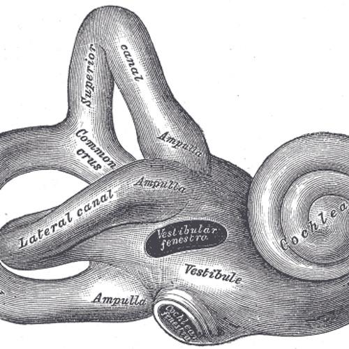 About Tinnitus