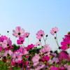 Flower Duet-Lakme