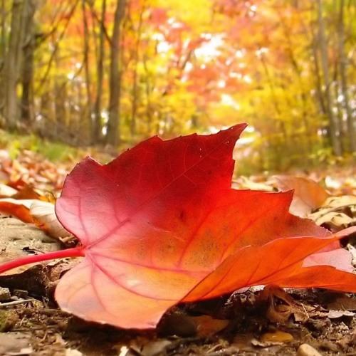Demir & Seymen - Autumn Leaf Mix
