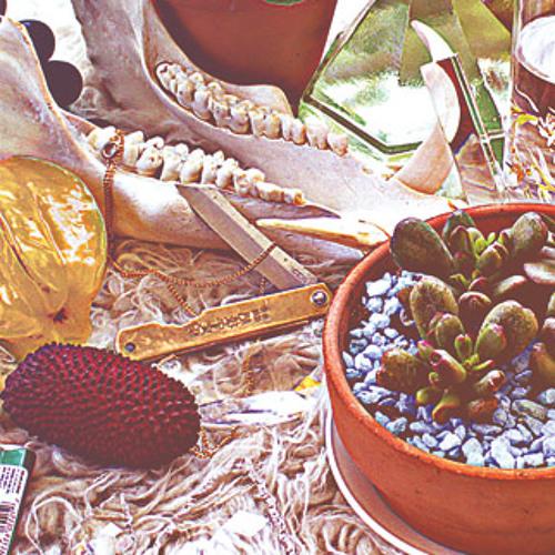 """Treasure Hunt - """"One Fungi"""""""