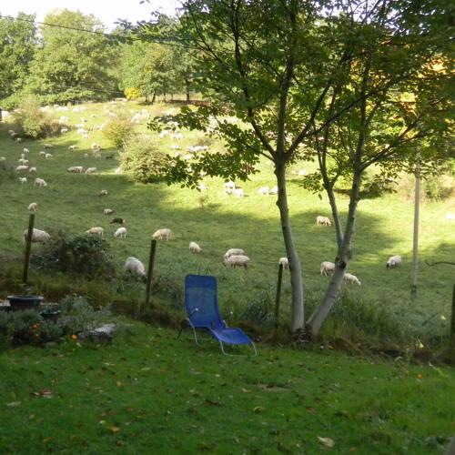 Around the meadows