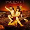 Not Enough - Van Halen [Cover]