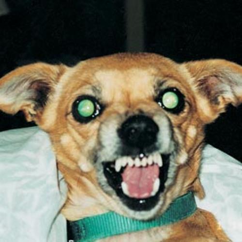 Botulism&Volvulus (Canine)