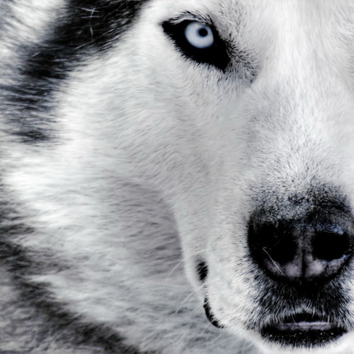REMAKE INSTRUMENTAL DAVID GUETTA SHE WOLF (NESSPROD)