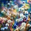 colour everywhere-christian bautista (amateur cover)