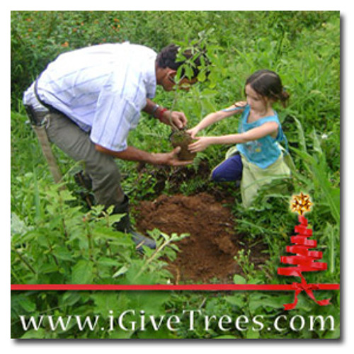 GIVE trees - GET music - www.iGiveTrees.com