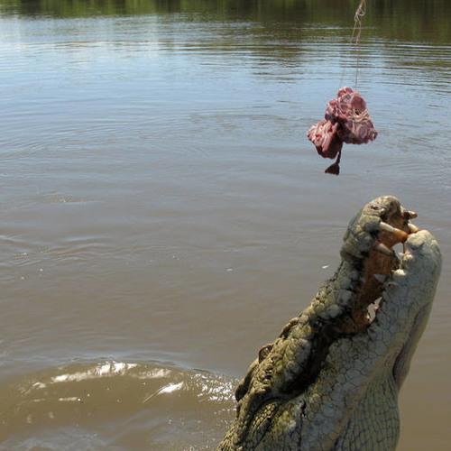 Les crocs instru