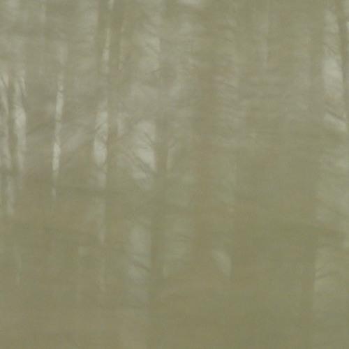 Eva2 - kiss the trees