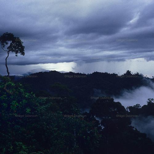 The Quiet Storm ( Lawrence Slocum )