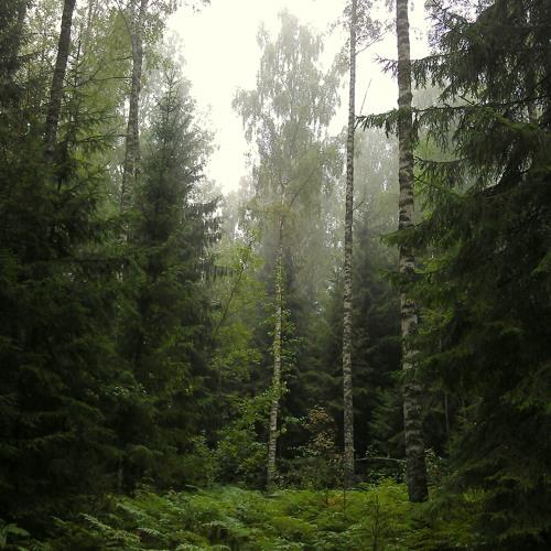 Metsavaikus