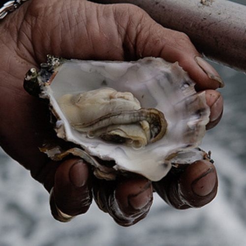 Ocean Acidification Threatens Northwest Shellfish