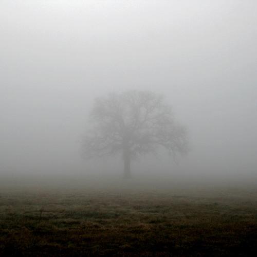 Forma en la niebla