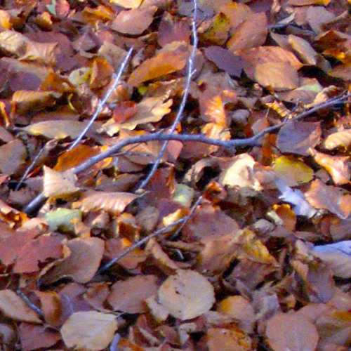 Those Autumn Leaves